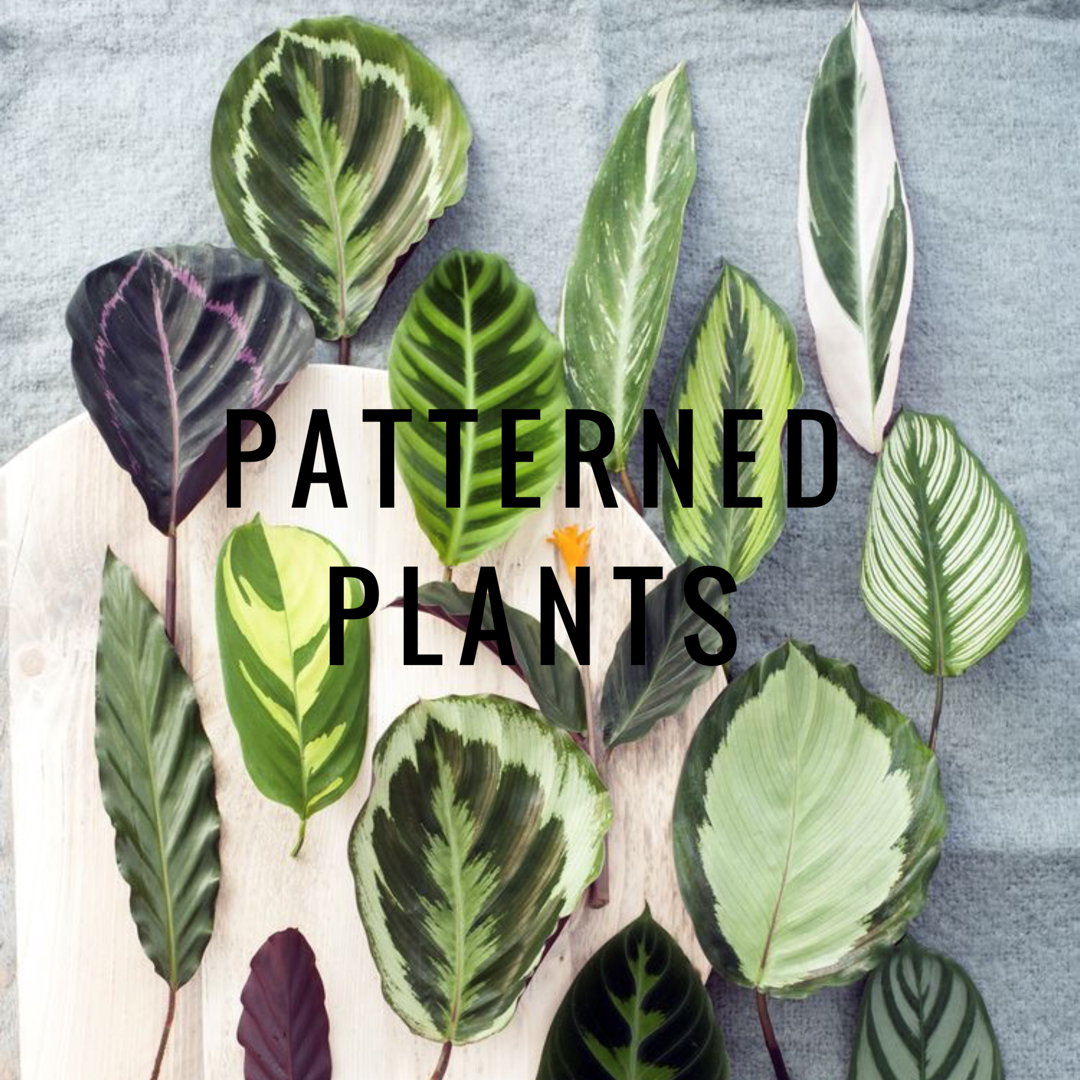 Patterned Plants